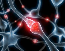 Das Endocannabinoidsystem: Körpereigene Cannabinoide und Cannabinoidrezeptoren