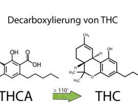 Die optimale Decarboxylierung von THC und CBD durch Erhitzung