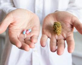 Das Cannabis-Dilemma: Ein breites therapeutisches Potenzial bei einer bisher begrenzten klinischen Forschung