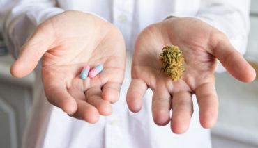 Presseschau: Jeder zweite Arzt befürwortet Cannabis-Legalisierung (Deutsche Apotheker Zeitung)