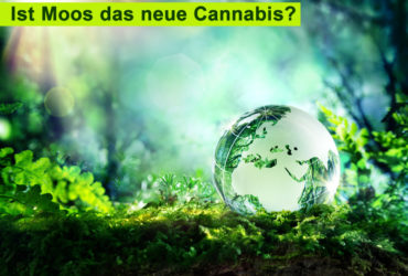 Ist Moos ist das neue Cannabis?